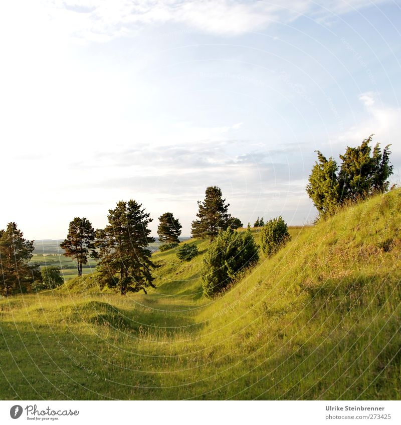UT S/HD 2012 Home Environment Nature Landscape Plant Sky Clouds Summer Beautiful weather Tree Grass Bushes Wild plant Field Forest Hill Mountain Swabian Jura