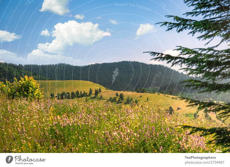 Summer nature with forested mountains and blooming plains Joy Vacation & Travel Mountain Environment Nature Landscape Weather Beautiful weather Warmth Meadow