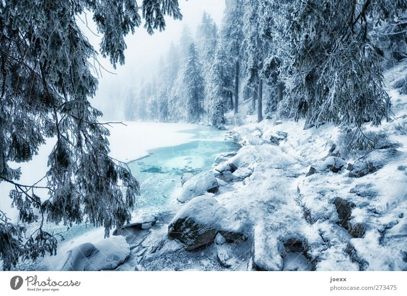 The ghosts at Mummelsee Nature Water Winter Weather Fog Ice Frost Snow Forest Lakeside Cold Blue Black White Idyll Mummelsee Lake Colour photo Exterior shot