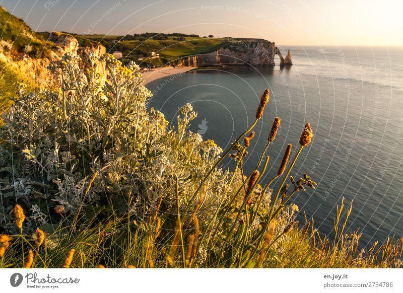 Weeds over Étretat Vacation & Travel Trip Far-off places Summer Summer vacation Sun Beach Ocean Nature Landscape Sky Horizon Sunrise Sunset Sunlight