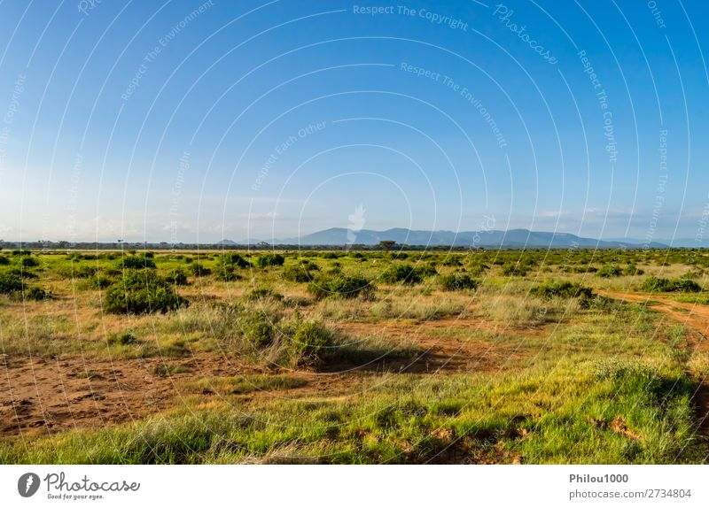 View of the trails and savannah of Samburu Park Playing Vacation & Travel Safari Summer Environment Nature Landscape Sky Tree Grass Blue Green Africa african