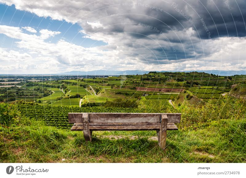 Kaiserstuhl Landscape Summer Beautiful weather Vine Hill Terraced field Bench Relaxation Moody Nature Vantage point Break Colour photo Exterior shot Deserted