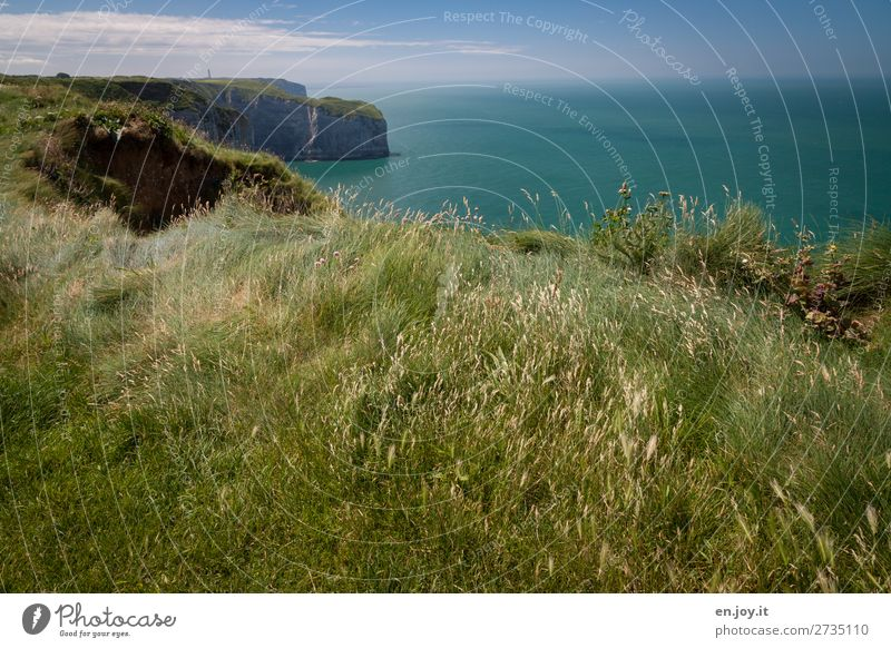 grassland Vacation & Travel Trip Far-off places Summer Summer vacation Ocean Nature Landscape Plant Earth Horizon Beautiful weather Grass Meadow Rock Coast