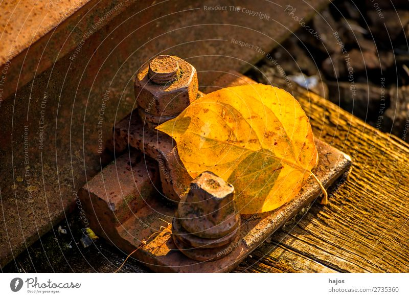 discoloured lime leaf on the track Nature Plant Warmth Yellow Background picture Lime leaf Autumnal rail threshold screw Old rusty still life Season Calm sunny