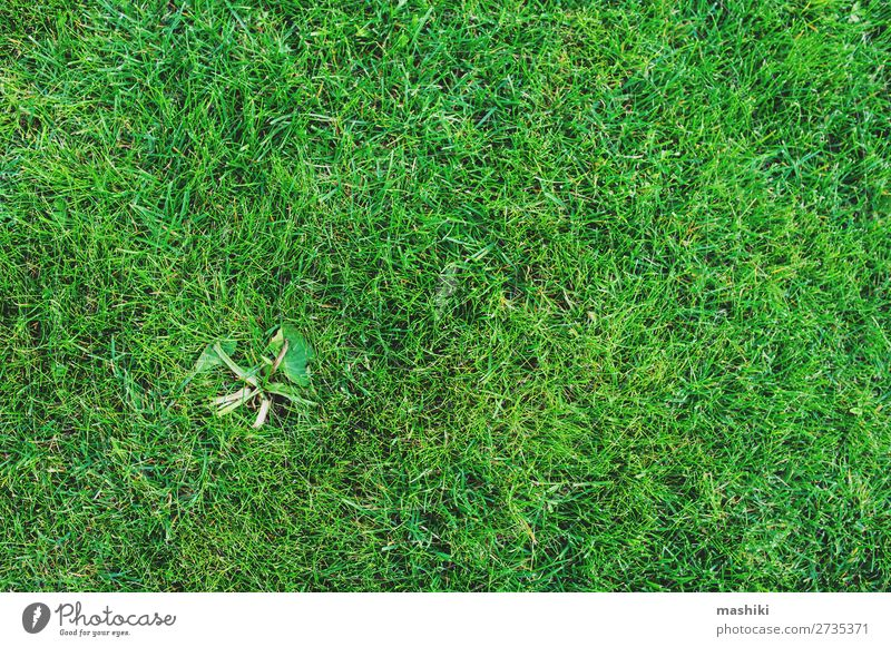 weed on lawn. Removing weeds from garden concept Summer Garden Work and employment Gardening Environment Nature Plant Earth Grass Park Growth Natural Green