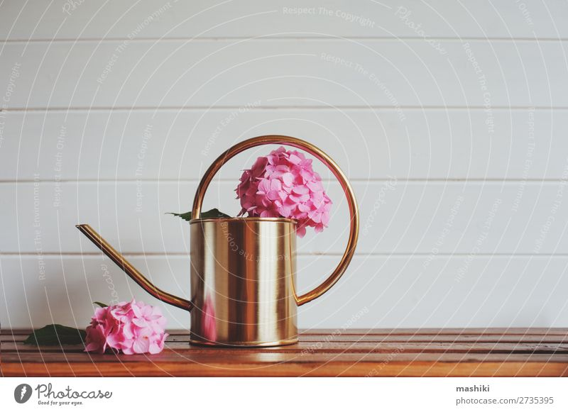 pink hydrangea flowers with watering can on wooden table Design Beautiful Leisure and hobbies Summer Garden Decoration Table Nature Plant Flower Bushes Leaf