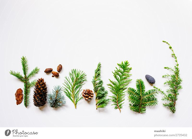 collection of various conifers and its cones Design Garden Decoration Gardening Nature Plant Tree Leaf Collection Exceptional Natural Above Green White