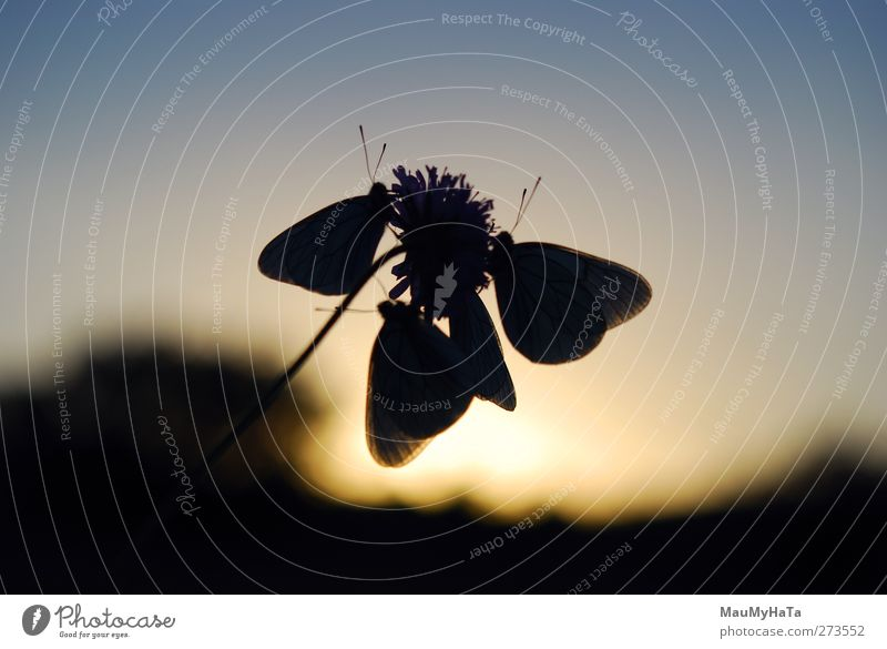 Silhouette of a Butterfly Sky Nature Plant Summer Sun Flower Animal Leaf Forest Emotions Spring Grass Blossom Garden Horizon Wild animal