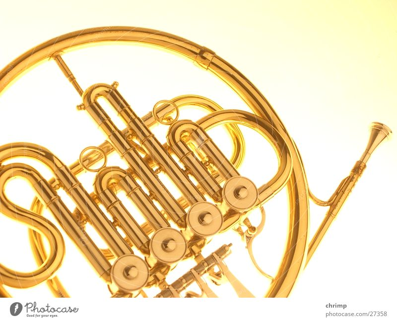 horn Things Antlers Musical instrument Gold