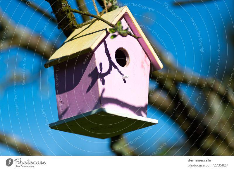 Villa Kunterbunt Nature Landscape Air Weather Tree Bird Box Decoration Birdhouse Wood Observe Discover Flying Feeding Sharp-edged Bright Funny Above Blue Brown