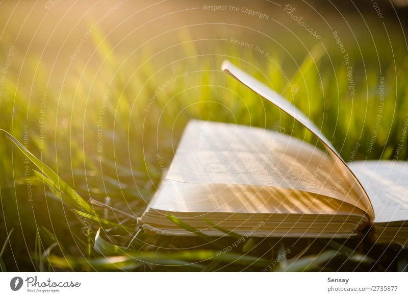 Open book outdoors Lifestyle Adventure Freedom Sun Hiking Adult Education School Study Experience Innovative Inspiration Know Colour photo Morning Dawn