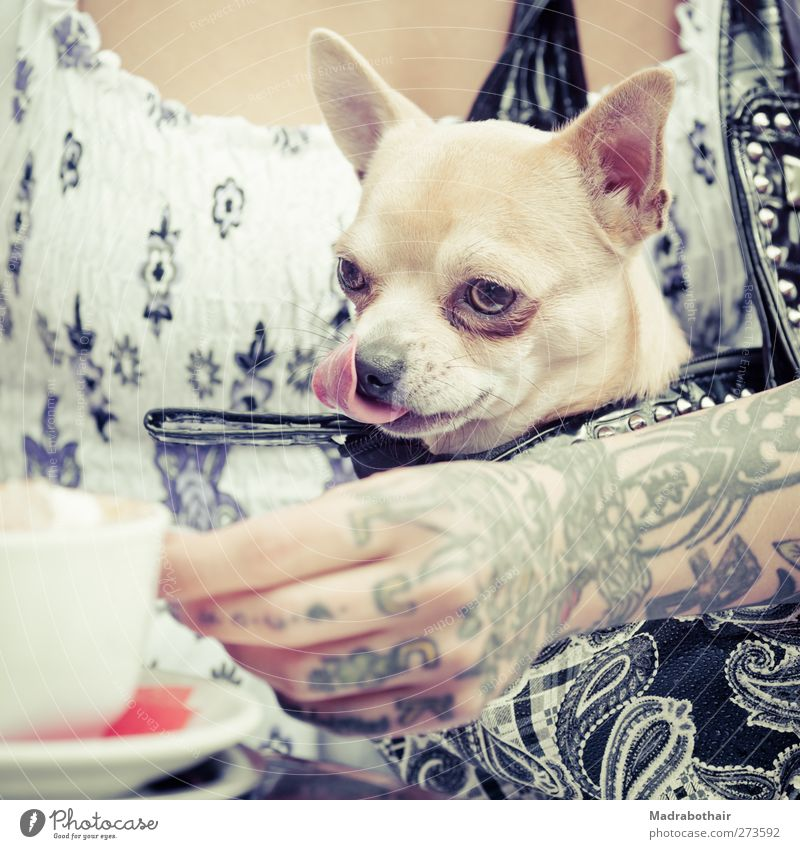 Dog Human being Youth (Young adults) Hand Animal Adults Feminine Life Young woman 18 - 30 years Beverage Coffee Drinking Curiosity Tattoo Café