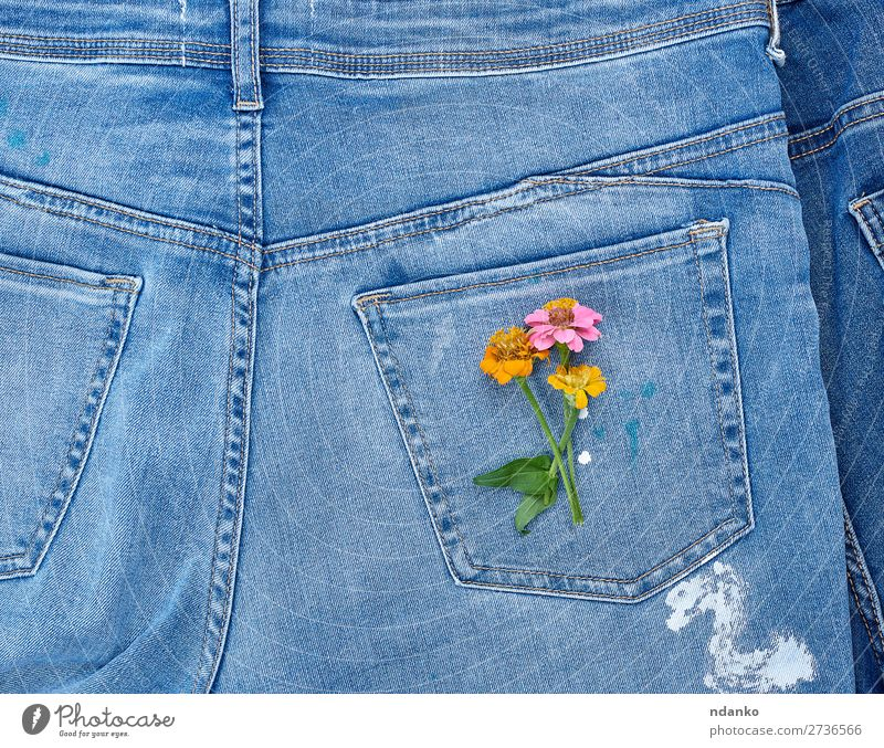 bouquet of flowers Style Design Blossom Fashion Clothing Jeans Old Blossoming Natural Blue Yellow Green Colour Tradition back background casual Cotton Denim
