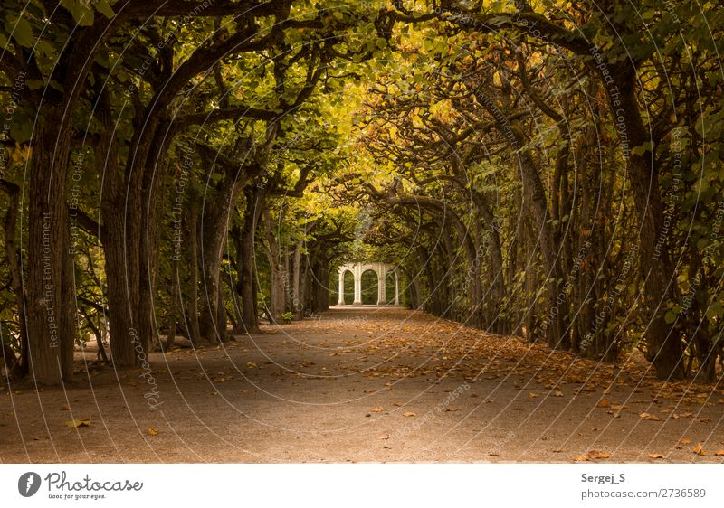 pavilion Nature Summer Autumn Beautiful weather Tree Park Avenue Bayreuth Germany Deserted Old Historic Yellow Gold Orange Warm-heartedness Romance Calm
