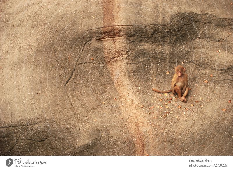 after all, you're always alone in life. Animal Wild animal Zoo Monkeys 1 Sit Brown Sadness Loneliness Gloomy Tracks Rock Canyon Colour photo Exterior shot