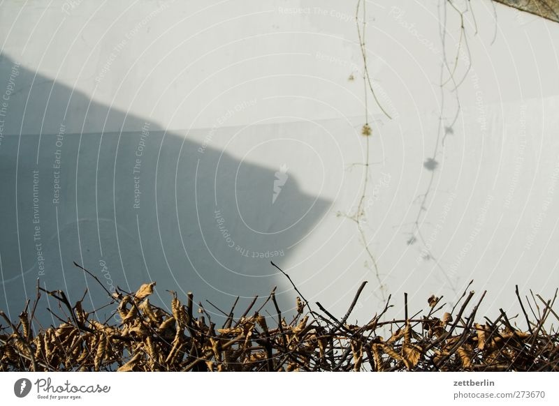 Nature City Environment Wall (building) Autumn Wall (barrier) Garden Building Facade Good Manmade structures Tendril Hedge Agricultural crop Shadow play