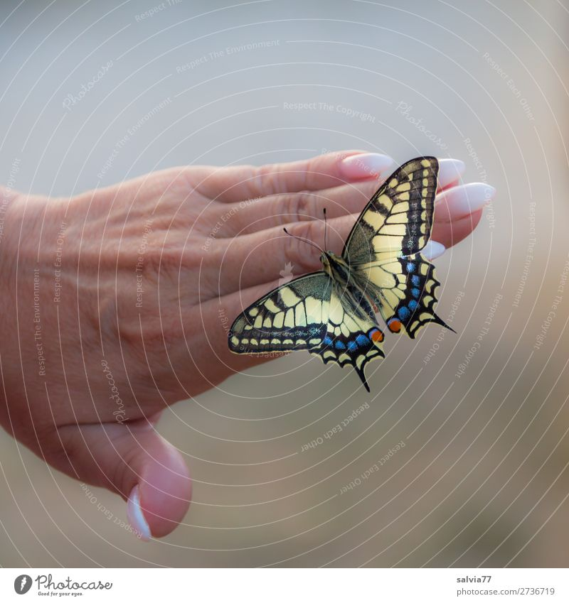 lightness Happy Beautiful Personal hygiene Manicure Nail polish Hand Fingers Animal Butterfly Wing Swallowtail Insect Esthetic Love of animals Attentive Ease