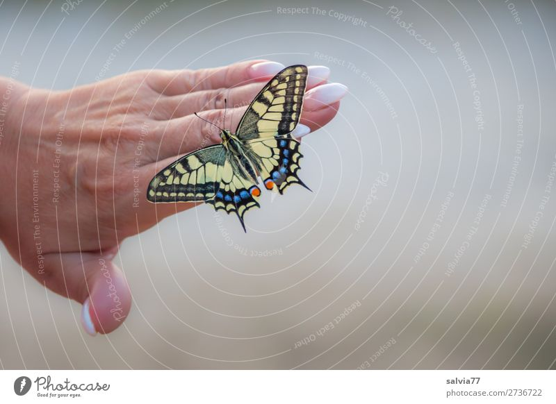 perfect manicure Manicure Hand Women`s hand nails Fingers Fingernail Beauty Photography pretty care Butterfly Swallowtail Papilio machaon Nail Skin beauty