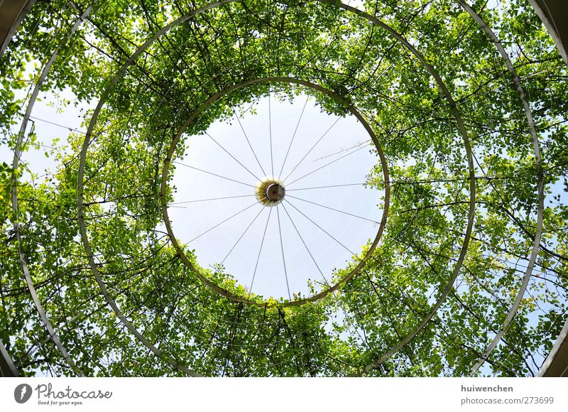 round and round and round Sky Nature Plant Blue Green Summer Sun Tree Leaf Environment Think Park Dream Air Growth Fresh