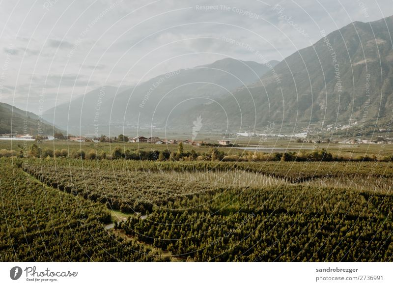 Vineyards in autumn South Tyrol vineyards Apple harvest fruit grapes Autumn Aerial photograph aerial photograph drone DJI
