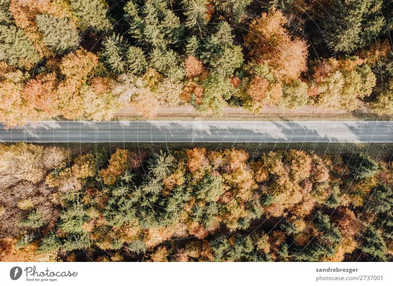 Forest path in autumn from above Autumn drone Aerial photograph trees Tree Street off