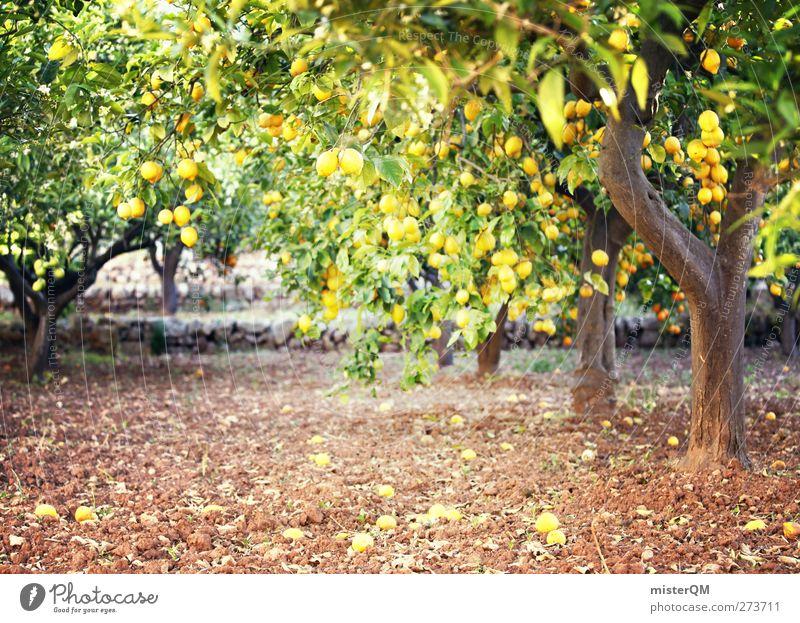 Orange Garden VI Art Esthetic Lemon Lemon juice Lemon yellow Lemon tree Lemon leaf Tree Plantation Majorca Mature Vitamin C Colour photo Subdued colour