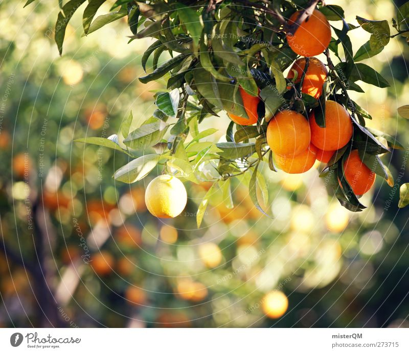Nature Calm Environment Fruit Orange Idyll Esthetic Organic produce Mediterranean Hang Mature Ecological Remote Organic farming Peaceful