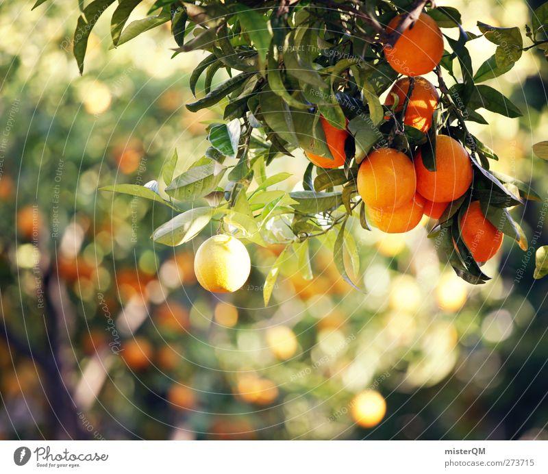 Orange Garden IX Environment Nature Esthetic Orange juice Orange peel Orange tree Orangery Fruit Tropical fruits Mature Ecological Organic produce