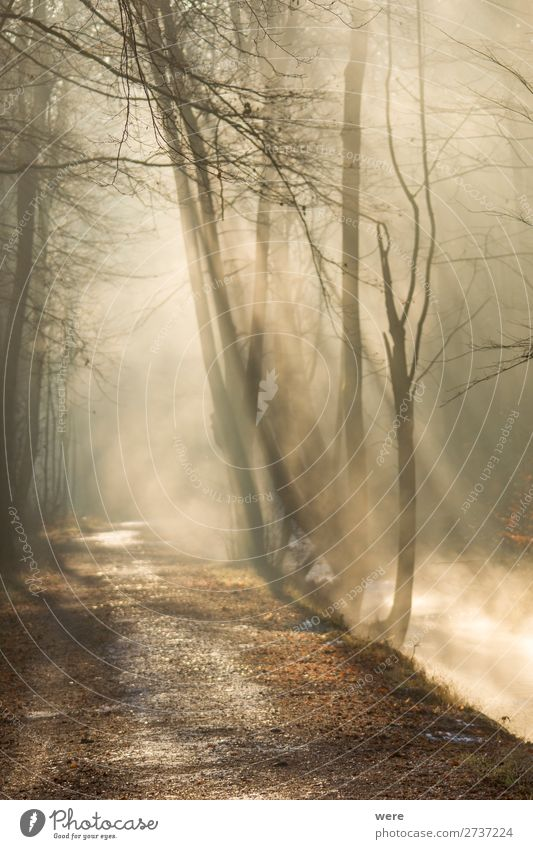 Fog rises on a sunny winter morning Winter Nature Sun Sunrise Sunset Sunlight Weather Beautiful weather Brook River Warmth copy space creek dirt forest path