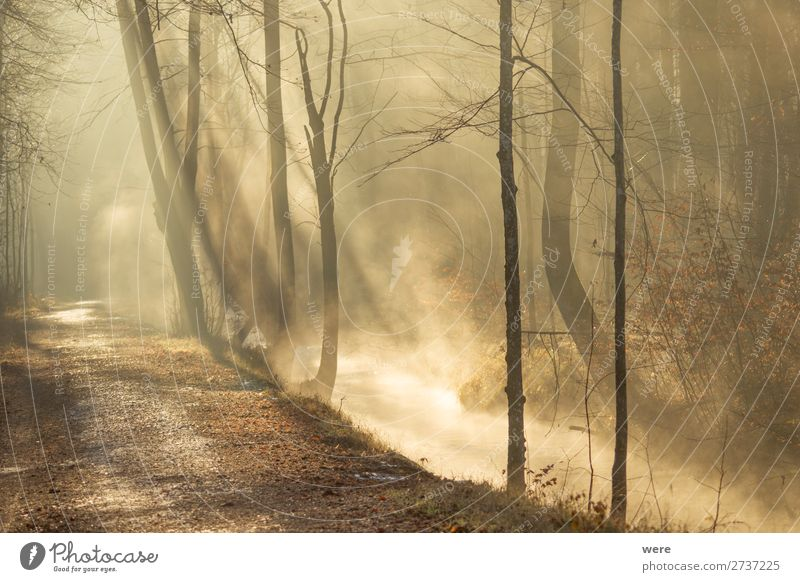 Fog rises from a creek Winter Nature Sunrise Sunset Sunlight River bank Brook Glittering Warmth copy space dirt fog forest path forest road landscape morning