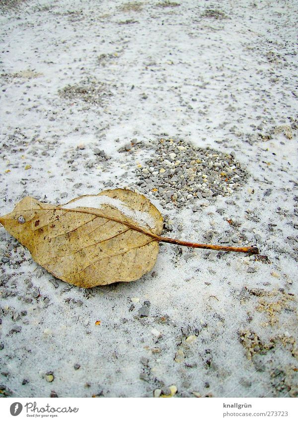 Nature White Plant Loneliness Leaf Winter Calm Environment Cold Snow Emotions Gray Brown Ice Moody Earth