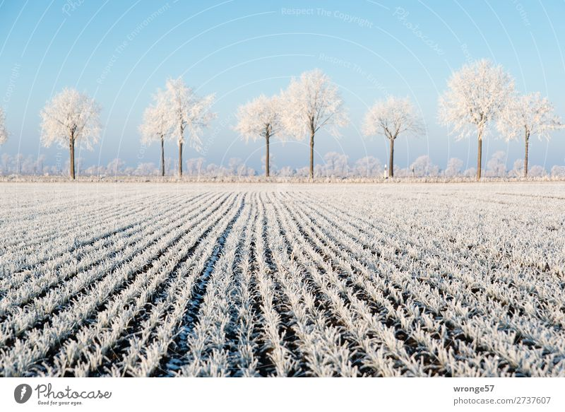 Plant Blue White Landscape Tree Winter Street Environment Cold Brown Ice Field Earth Air Beautiful weather Frost