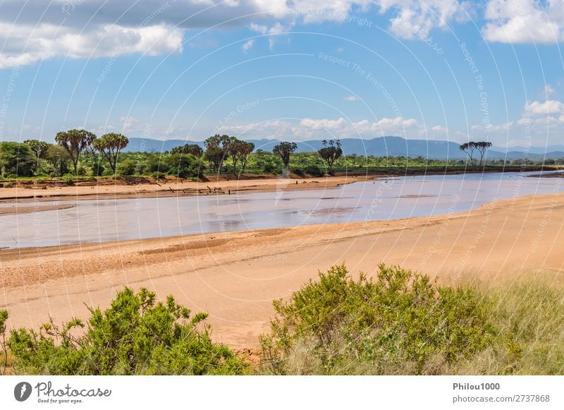 View of the Ewaso Ng'iro River in the savannah Beautiful Nature Landscape Sky Park Forest Virgin forest Green Samburu Africa background falls Kenya national