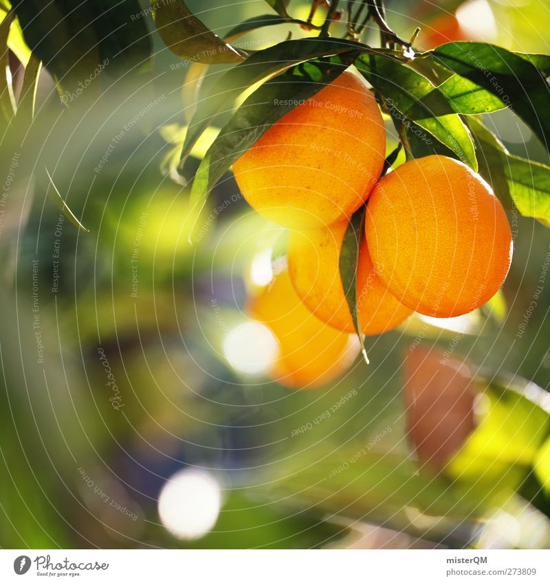 Nature Environment Healthy Fruit Orange Esthetic Climate Beautiful weather Organic produce Hang Mature Ecological Climate change Juice Plantation