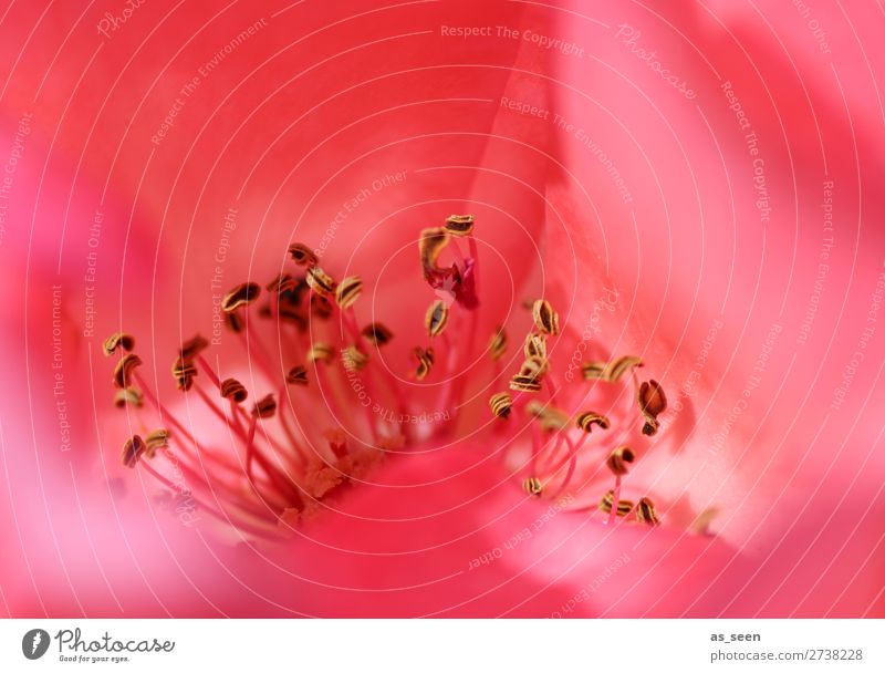 Nature Summer Plant Colour Red Flower Eroticism Black Life Environment Love Blossom Spring Emotions Pink Illuminate