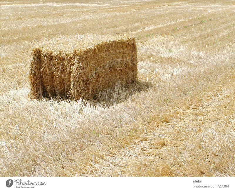 straw bale Bale of straw Straw Field Stubble field Cuboid Sharp-edged Yellow Bound Bundle Sun Shadow Harvest