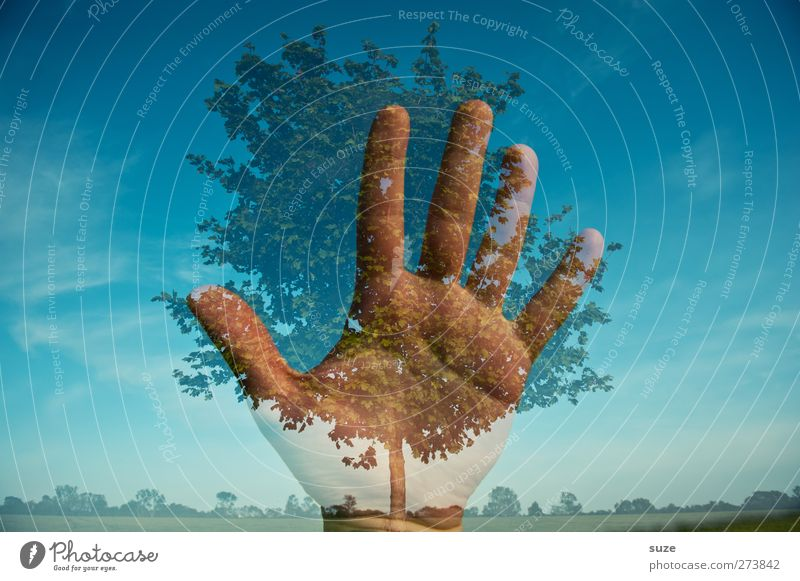 Save the nature Hand Fingers Environment Nature Landscape Plant Elements Sky Horizon Climate Climate change Beautiful weather Tree Blue Protection