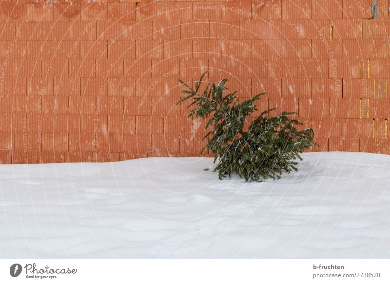 Yesterday's Christmas tree Winter Bad weather Snow Snowfall Tree Building Wall (barrier) Wall (building) Lie Old Loneliness Past Transience Change Second-hand