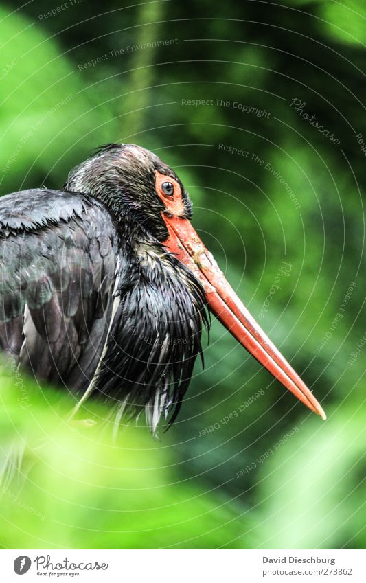 Green Red Animal Black Eyes Head Bird Wild animal Sit Feather Wing Animal face Zoo Beak Plumed Stork