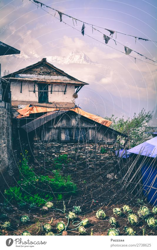 Farmhouse in Ghandruk with Annapurna in the background mountains High mountain region Sunlight Asia Nepal Himalayas Peak Hut Mountain farmer