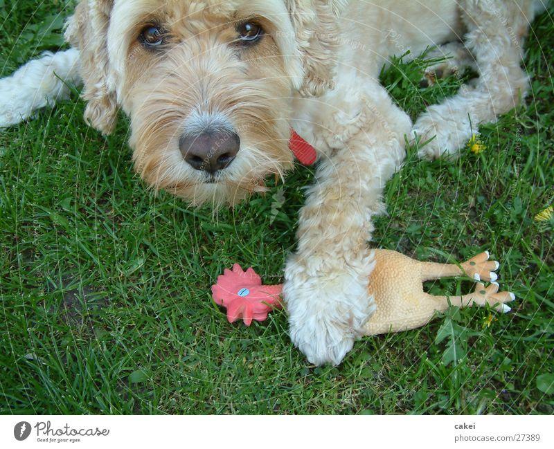"""Mine!"" Dog Friendship Antagonism Food envy Playing Thief Summer Hunting"