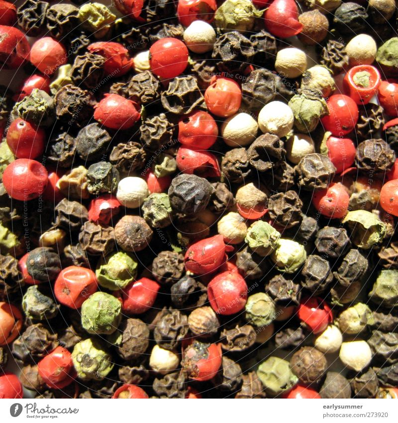 Green Red Black Nutrition Design Cooking & Baking Herbs and spices Square Pepper Peppercorn