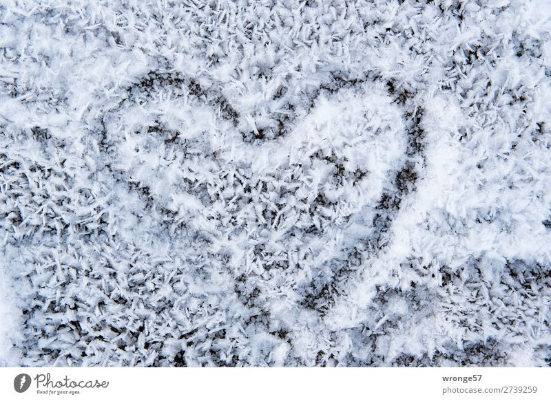 Cold love Sign Heart Black White Hope Love Valentine's Day Cold shock Hoar frost Winter Display of affection Colour photo Subdued colour Exterior shot Close-up