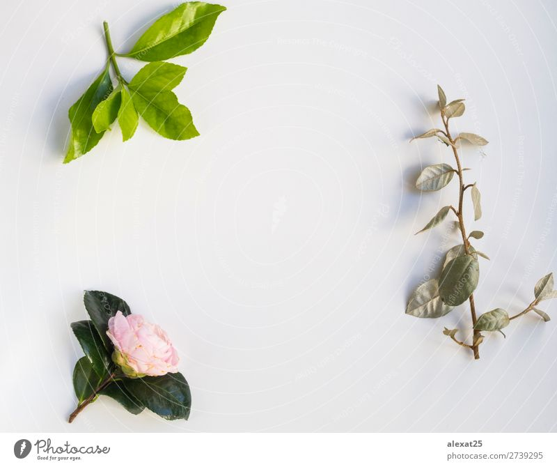 Leaves and pink flower frame on white bakcground Nature Plant Green White Flower Leaf Love Natural Feasts & Celebrations Pink Decoration Vantage point Birthday