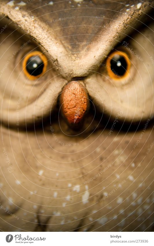 Look me in the eye. Sculpture Wild animal Bird Animal face Owl eyes Owl birds 1 Observe Glittering Looking Exceptional Astute Funny Curiosity Interest
