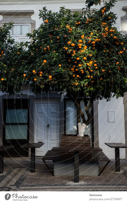 shaded place fruit Fruit trees Tree Places Bench Table Town Portugal Lisbon House (Residential Structure) Exterior shot Colour photo Autumn Winter