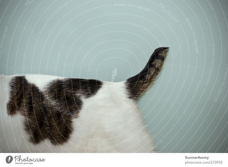 Half and half Animal Pet Cat cat's tail 1 Glass Walking Exceptional Broken Brown Turquoise White Bravery Movement Bizarre Uniqueness Whimsical Subdued colour