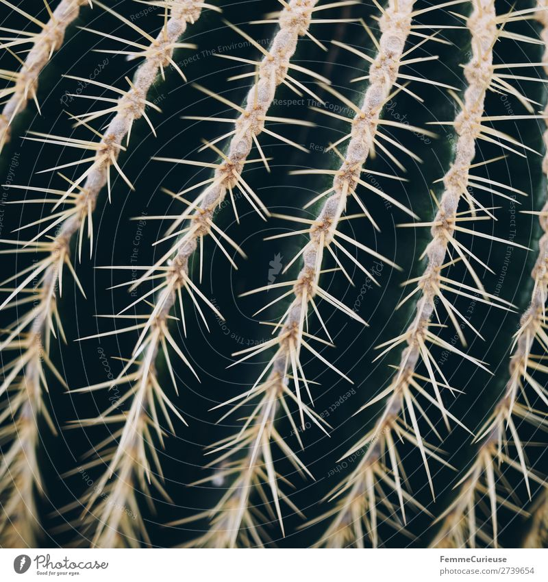 Close-up of the spines of a cactus Nature Thorn Cactus Plant Point Thorny Structures and shapes Green Colour photo Interior shot