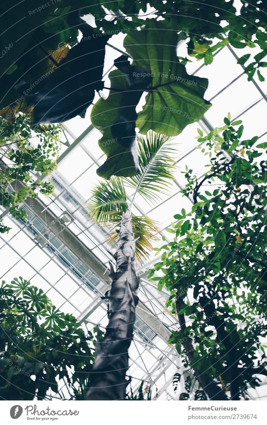 View from below of glass roof in greenhouse Nature Greenhouse Botanical gardens Botany Glass roof Plant Roof Pane Palm tree Bright Foliage plant Colour photo