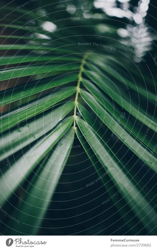 Leaf of a palm tree Nature Structures and shapes Pattern Palm tree Leaf green Palm frond Stalk Green Greenhouse Botanical gardens Foliage plant Colour photo